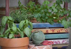 Herb Box | Joy of Yum